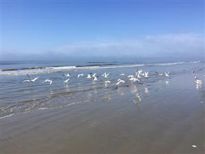 Beach with birds
